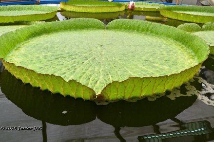 Jardín botánico Fundación Sales (3)
