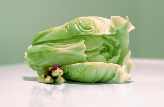 cabbage_and_bug_small