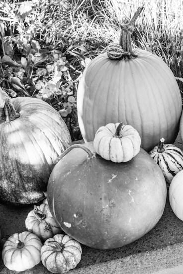 pumpkins_gourds copy