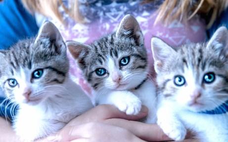kittens_1 copy