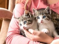 kittens_5 copy