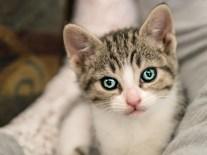 kittens_6 copy