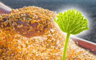 mycotoxins-in-feed-grain