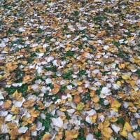 Pollock de Outono
