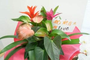 flower013