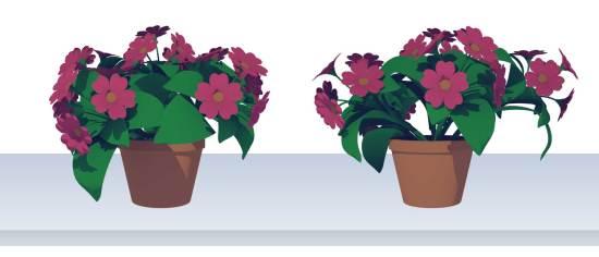 plants-dms