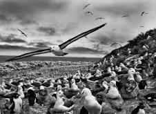 Jason Islands, Falkland Islands, 2009