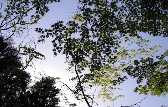 GW2日目:「春日大社 藤の花」とPENTAX の緑がお気に入り