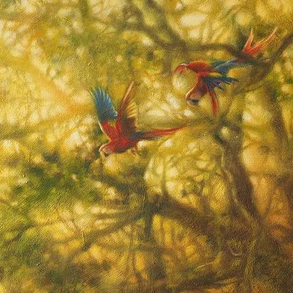 macaws detail