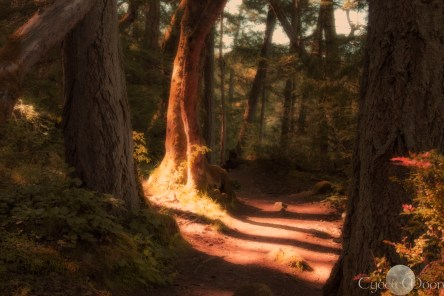 rain forest path on Vancouver Island