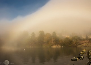 a lone gull is unveiled in the mist