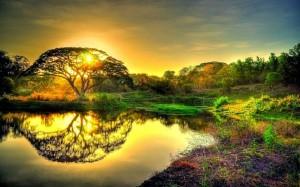 Misteri Sidratul Muntaha, Pohon yang Tumbuh di Atas Langit
