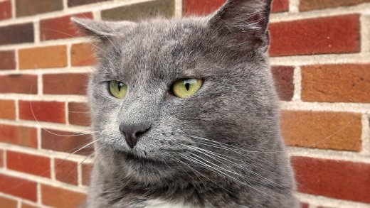 A rather disappointed looking cat.