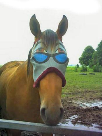 Funny Horse Face : funny, horse, Horse, Funny, Pictures, Entertainment