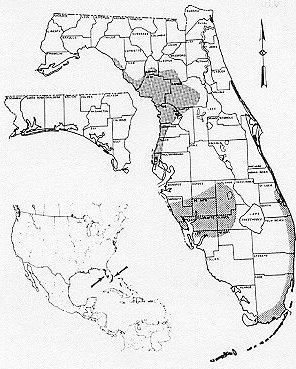 The Coontie of Florida