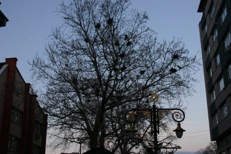 a bird hotel