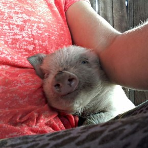 I was together with this piglet for a week