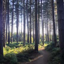 Sherwood Pines