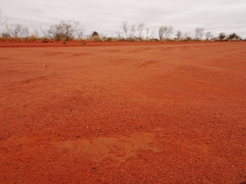 The Humpbacked Whales of the Tanami. Or is it part of the Caterpillar Dreaming?