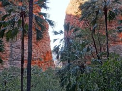 Palms and the way out