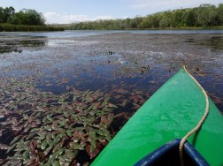 My kayak in the a quiet area where there are plenty of water plants and birds.