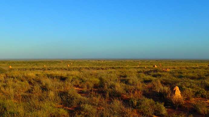 The most prominent features are termite mounds. That's a lot space out there