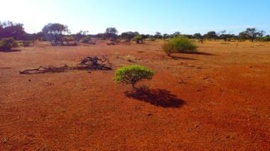 Murchison views. Again