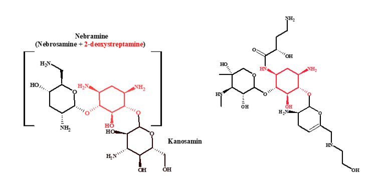 tobramycin and plazomicin