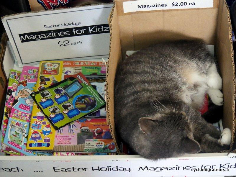 $2 le chat, c'est par cher. Croquettes non fournie.