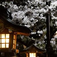 Japon, le retour