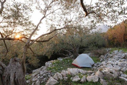 Bivouac sous les oliviers.jpg