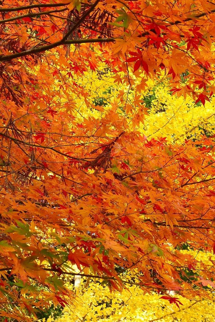 autumn colors japan