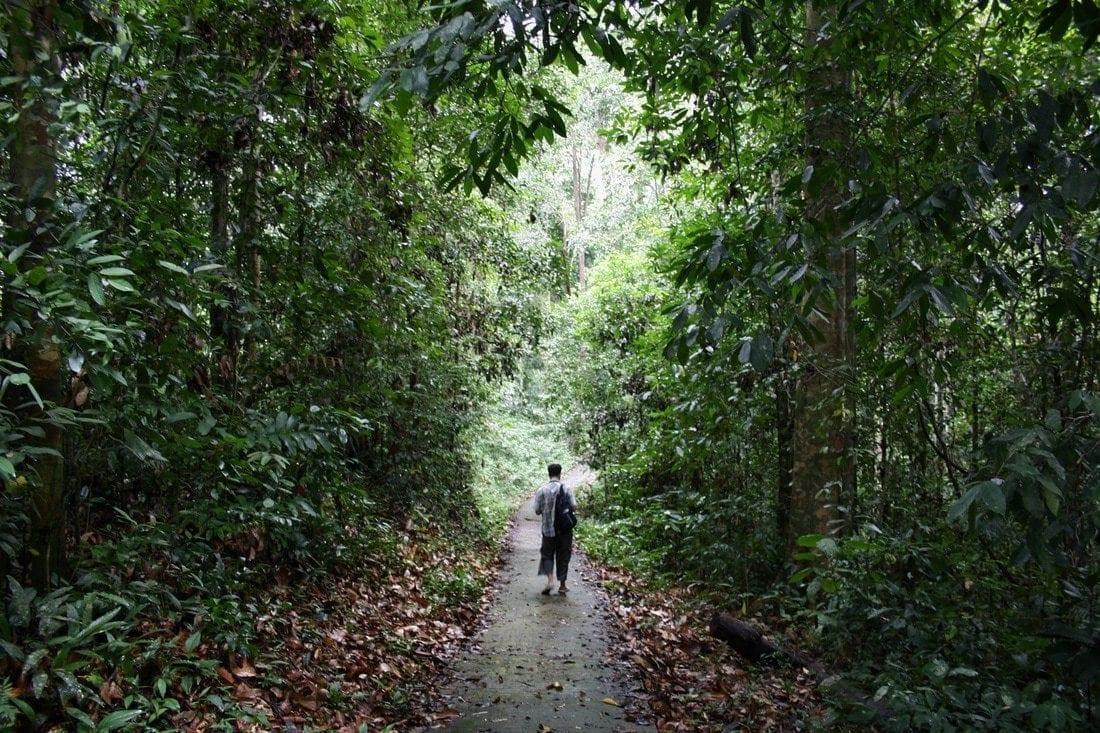 hiking jungle Niah Borneo