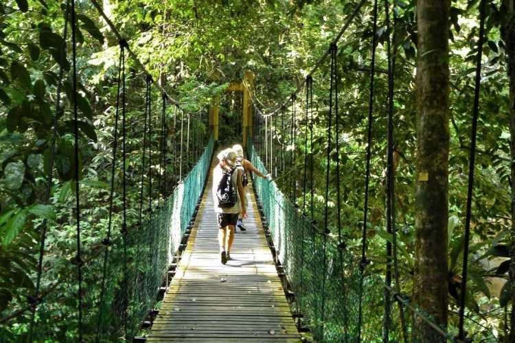 ponte al parco nazionale Lambir Hills Miri Borneo