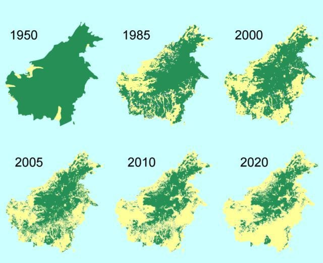 deforestation in Borneo. Image from washinton.edu