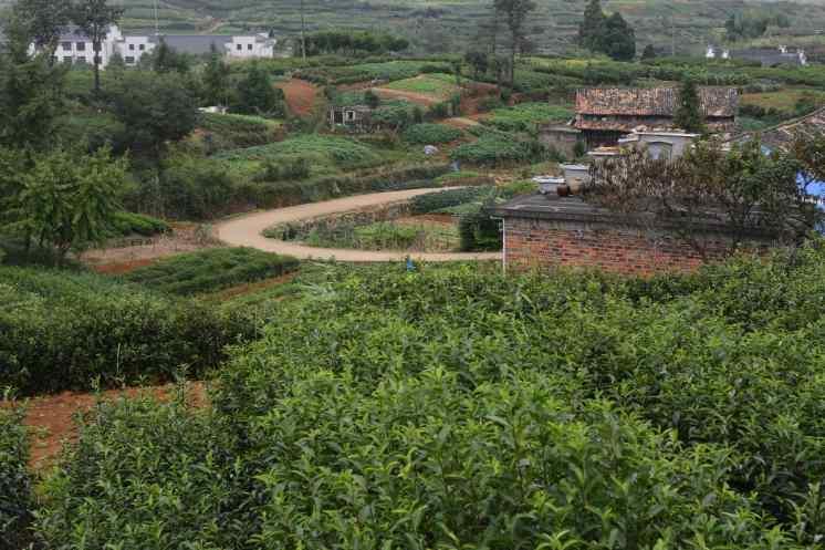 campi in China