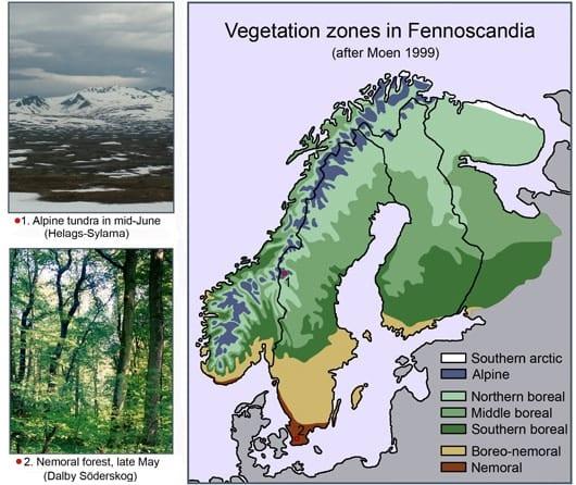 vegetazione norvegia
