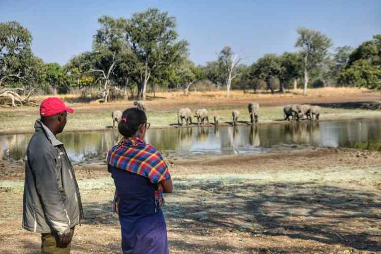 Zambia's Best Safari: South Luangwa National Park in Mfuwe