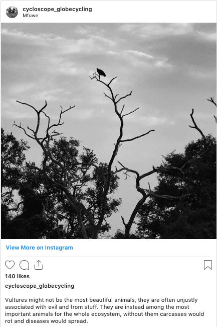 zambia safari instagram