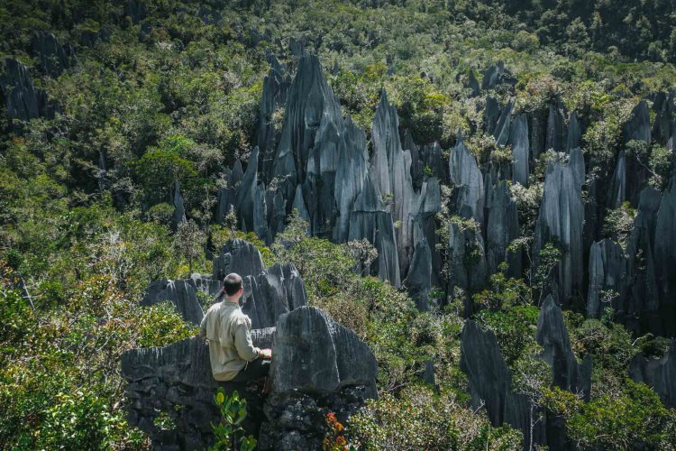 Mulu Pinnacles Borneo things to do
