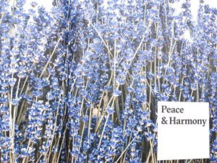 Peace And Harmony Pukka