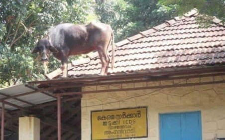 What's the Animal doing on the roof