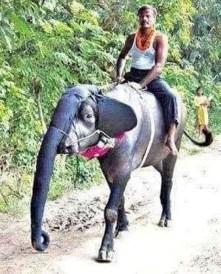 Indian Elephant Ride