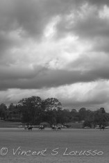 Upcountry Polo Under the Clouds