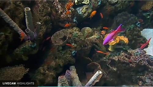 aquarium of pacific.jpg