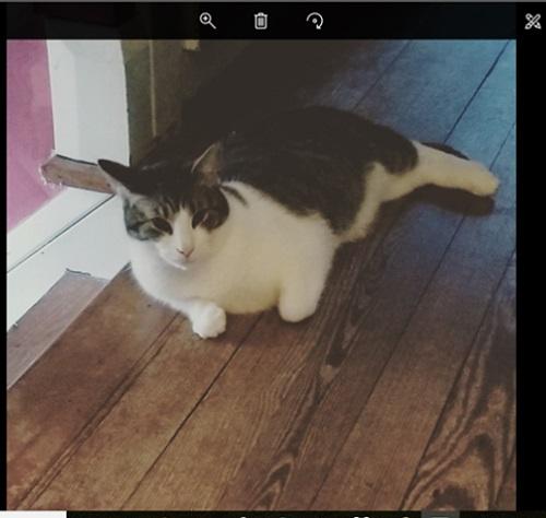 photo-app-rotated-cat.jpg