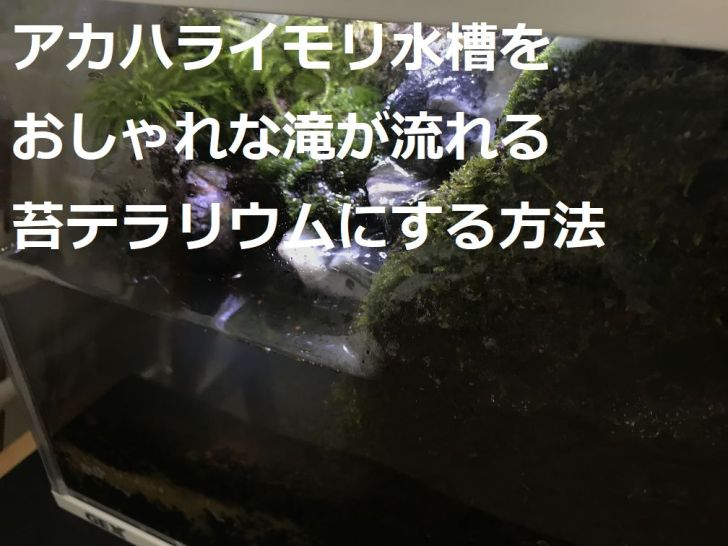 カハライモリ水槽をおしゃれな滝が流れる苔テラリウムにする方法