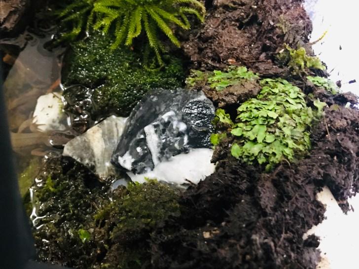 アカハライモリ水槽 滝