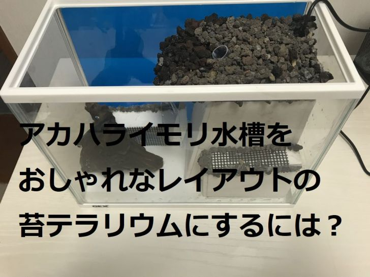 アカハライモリ水槽をおしゃれなレイアアウトの苔テラリウムにするには?