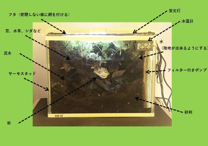 アカハライモリの飼育水槽